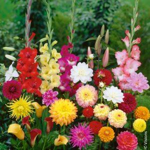 bulbi de flori en-gross